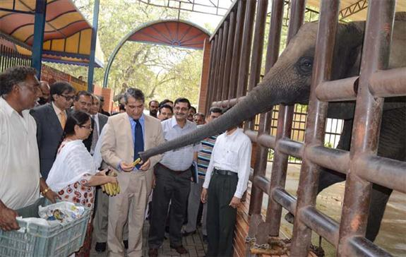 Awesome Karachi: Mar 26: Chief Secretary Sindh Sajjad Salim Hotiana Said The  Up Gradation Of Karachi Zoo Into An Internationally Recognized Zoo Would  Provide Better ...